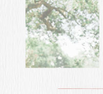 Bryn Clancy | BHLDN Bride