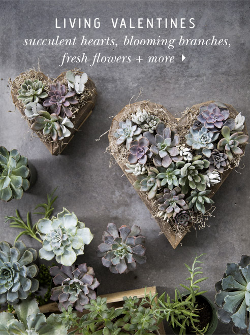Succulent Sweethearts | plus fresh flowers, blooming branches + more living Valentines