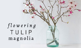 Flowering Tulip Magnolia