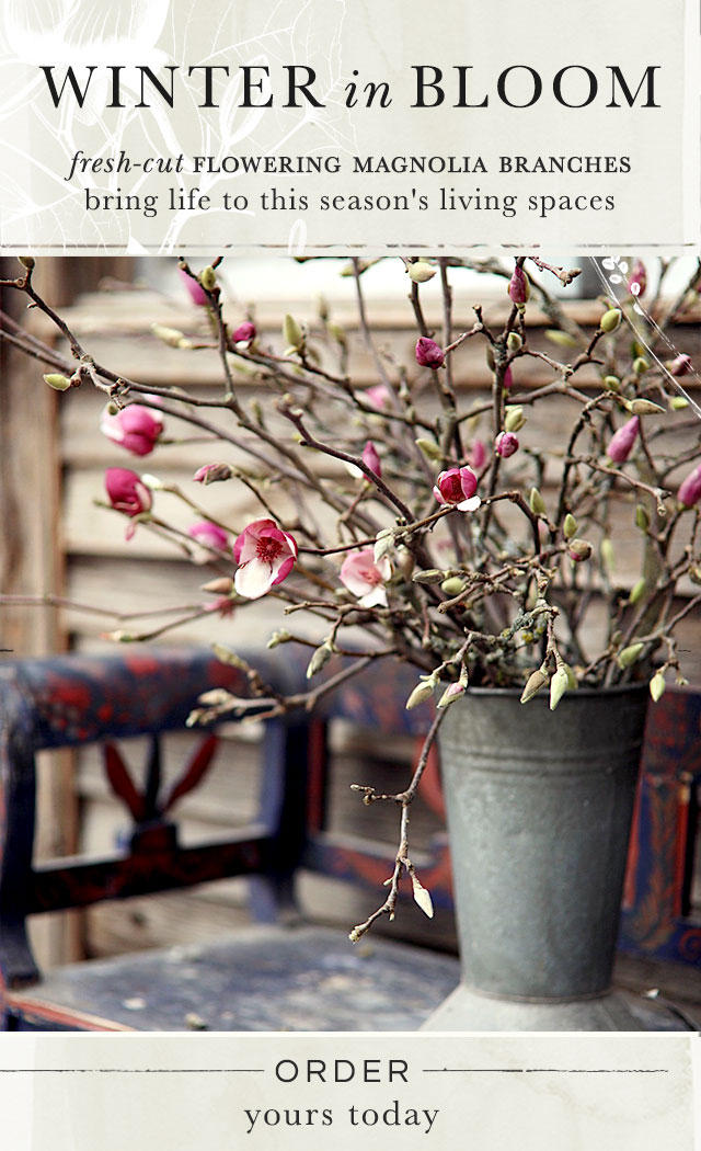 Winter in Bloom | fresh-cut flowering magnolia branches bring life to this season's indoor spaces | order yours today