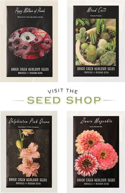 Making Plans For the Garden? Visit the Seed Shop