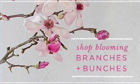 Shop Blooming Branches + Bunches