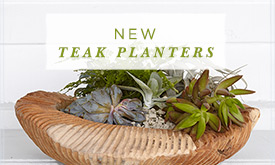 Drawn from Nature | NEW Teak Planters