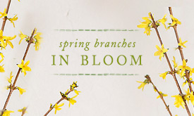 Spring Branches in Bloom