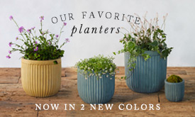 Our Favorite Planters