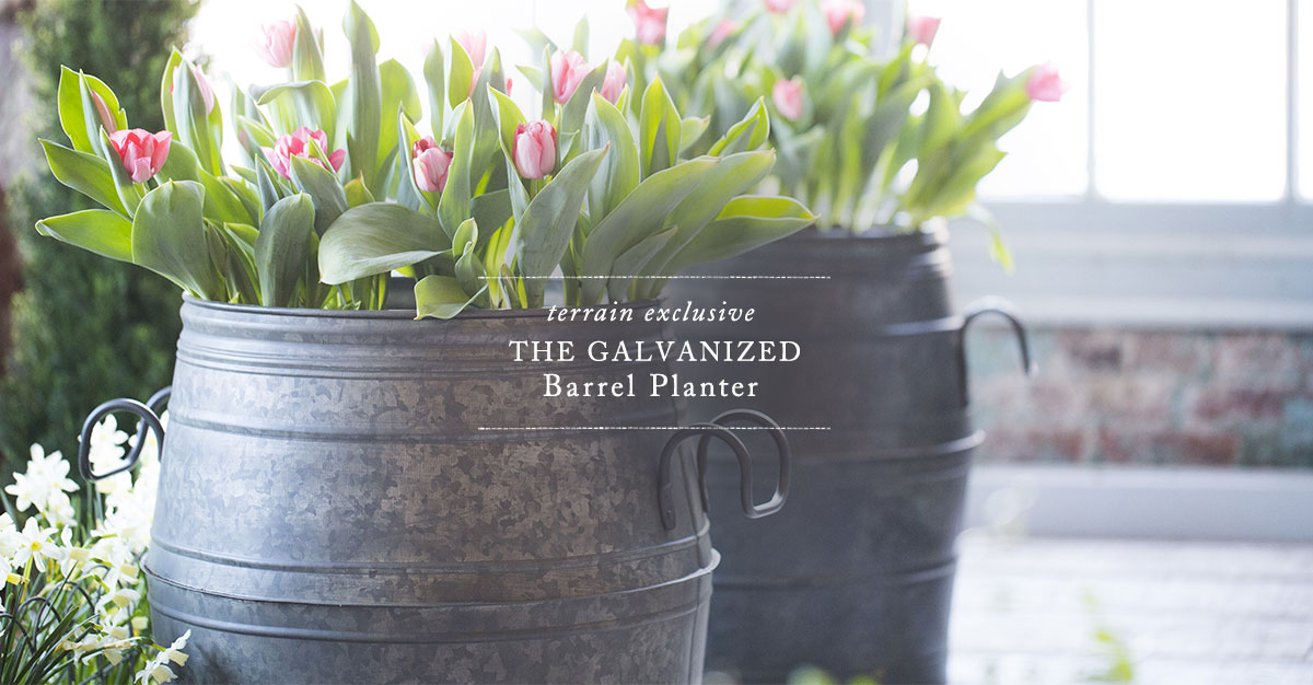 Terrain Exclusive | The Galvanized Barrel Planter
