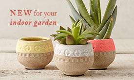 NEW for Your Indoor Garden