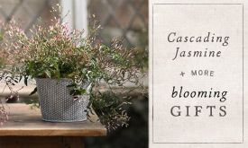 Cascading Jasmine + More Gifts in Bloom