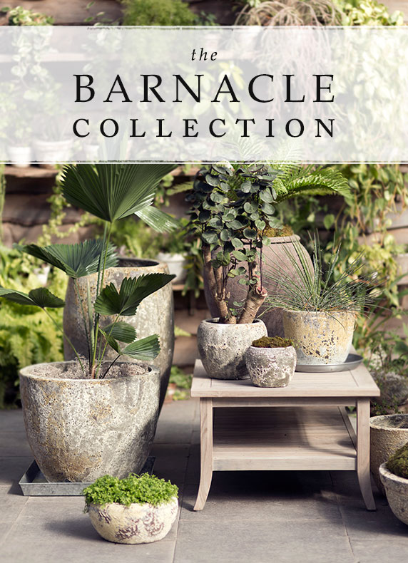 Barnacle Planters