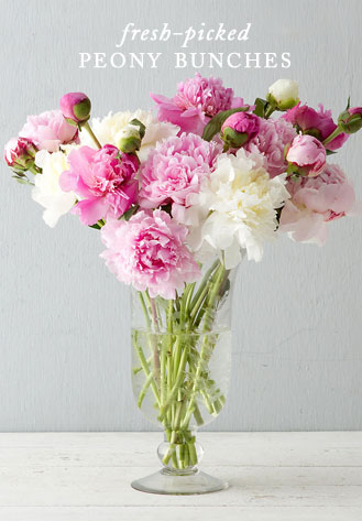 Fresh-Picked Peony Bunches