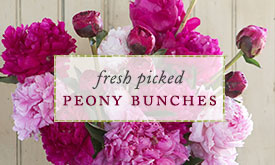 Fresh picked peony bunches