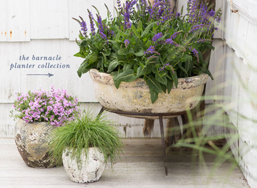 the barnacle planter collection