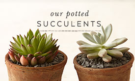 Our potted succulents