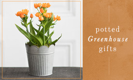 Potted Greenhouse Gifts