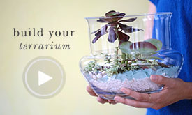Build your terrarium