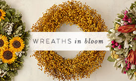 Wreaths in bloom