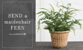 Send a Maidenhair Fern