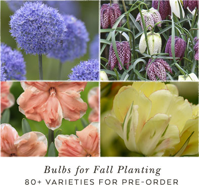 bulbs for fall planting | 80+ rare varieties for preorder