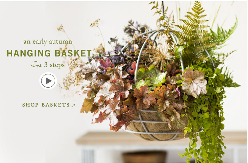 An early autumn Hanging Basket | in 3 steps
