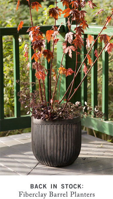 Back in Stock: Fiberclay Barrel Planters