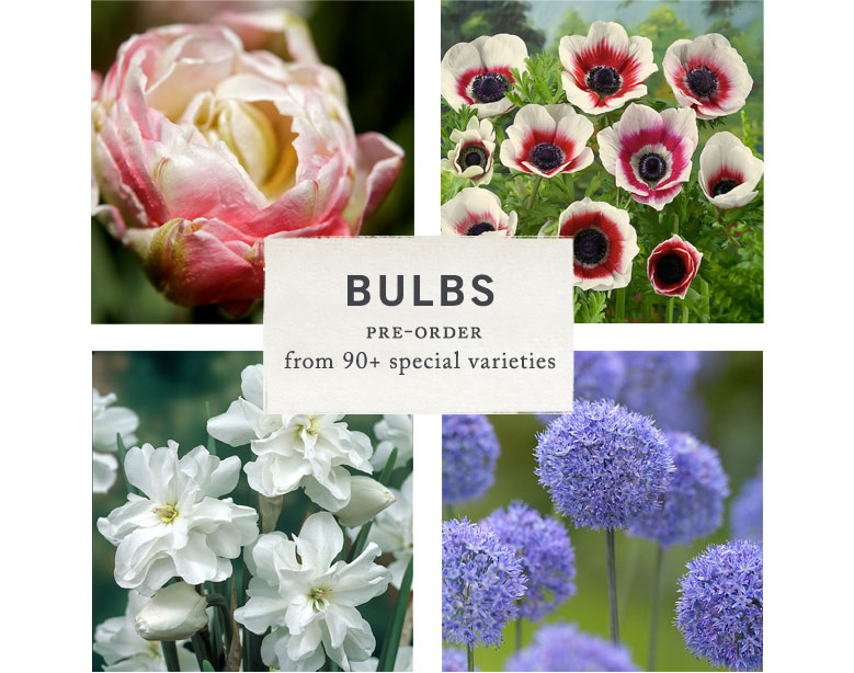 Spring Flowering Bulbs | pre-order from 90+ special varieties