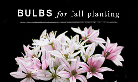 BULBS for Fall Planting