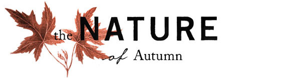 The Nature of Autumn | outdoor seating