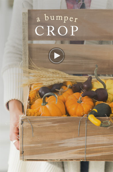 a bumper crop of fall pumpkins