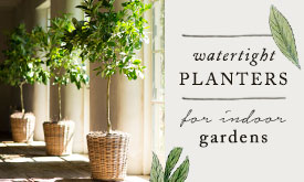 Watertight Planters | for indoor gardens