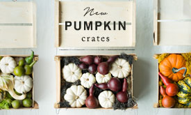 NEW Pumpkin Crates | 3 hand-picked fall palettes