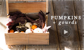 Pumpkins + gourds | in 5 fall colorways