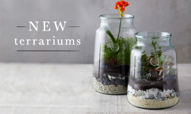 New terrariums