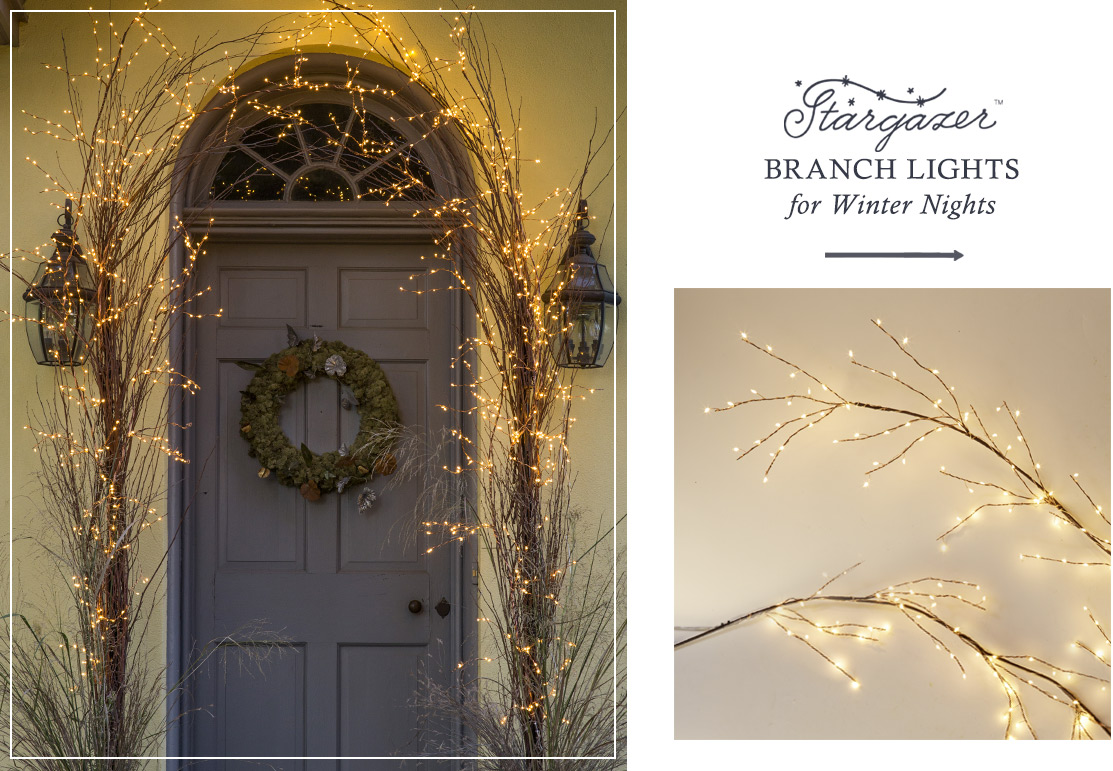 Stargazer Branch Lights for Winter Nights