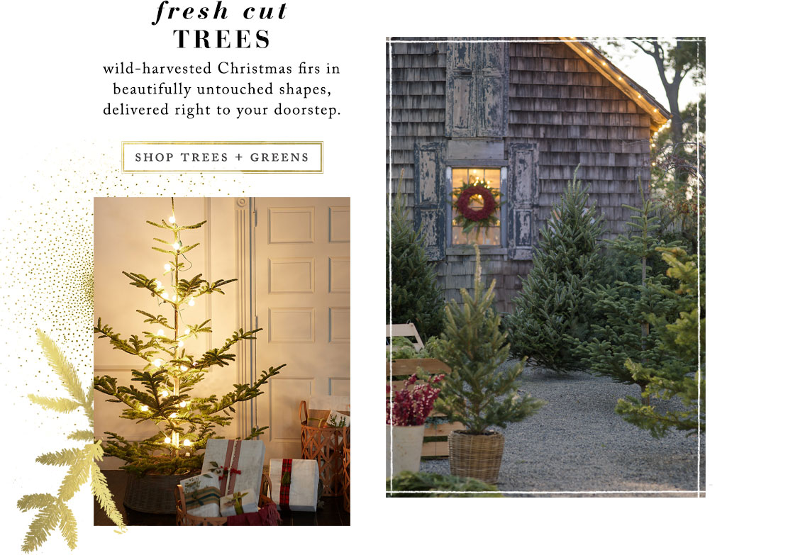 Fresh Cut Trees | wild-harvested Christmas firs in beautifully untouched shapes, delivered right to your doorstep. | Shop trees + greens