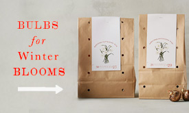 Bulbs for Winter Blooms