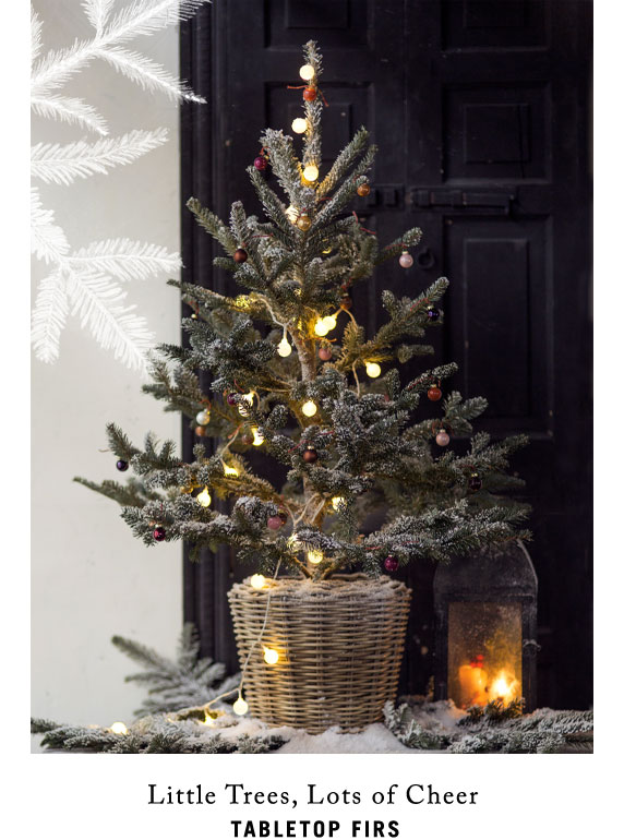 Little Trees, Lots of Cheer | tabletop fir