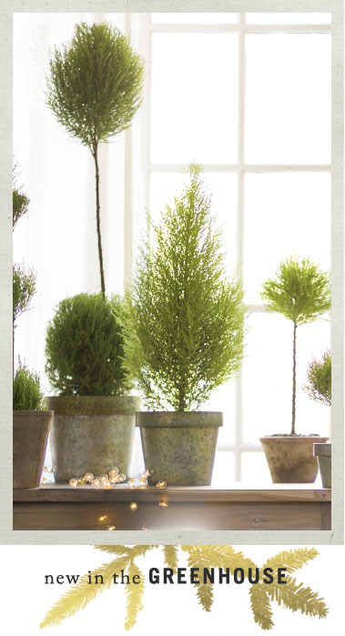 New in the Greenhouse | lush green topiaries