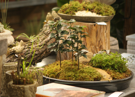 Winter Dish Gardens at Terrain